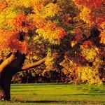 Jesień (2)